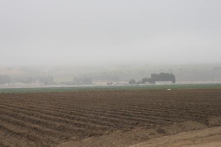 img 4161 Salinas Valley Half Marathon, 2011