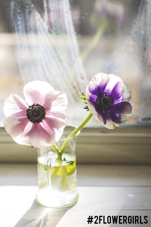 2flowergirls anemones