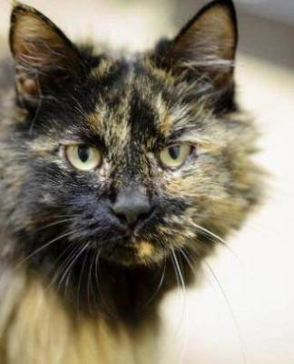 Southern Utah Adoptable Pets Guide: Natani