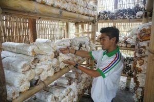 Program CSR Pertamina Tingkatkan Ekonomi Masyarakat Melalui Budidaya Jamur