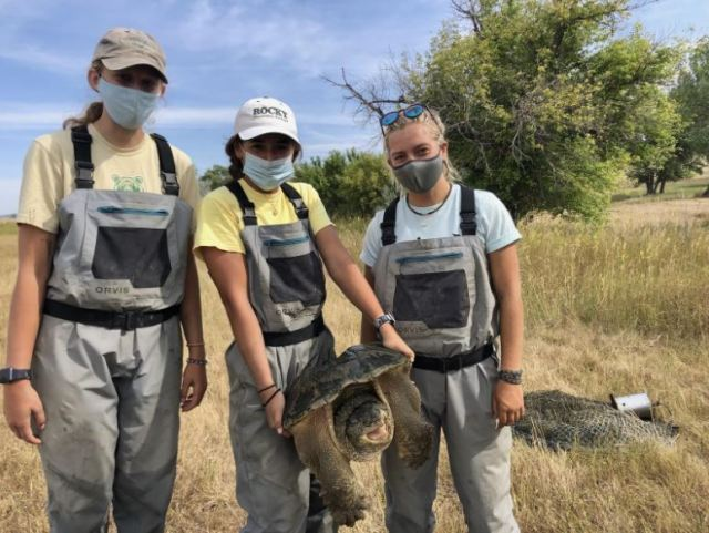 Student Researchers (left to right): Lauren Ryter, Addison Valdez, and Larissa Saarel hold a feisty snapping turtle.   Photo courtesy of Kayhan Ostovar.