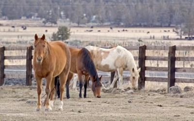 Harnessing high quality horsepower for biz growth