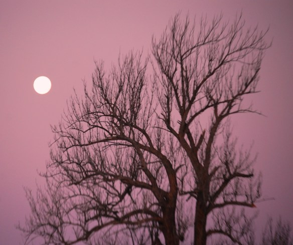 Moon glows over a winter tree in January near Versailles, KY