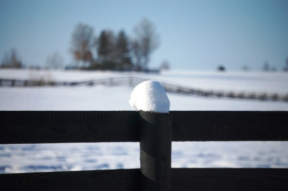February snow in Horse Farm Country