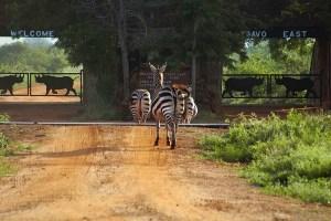 tsavo_east_national_park_013