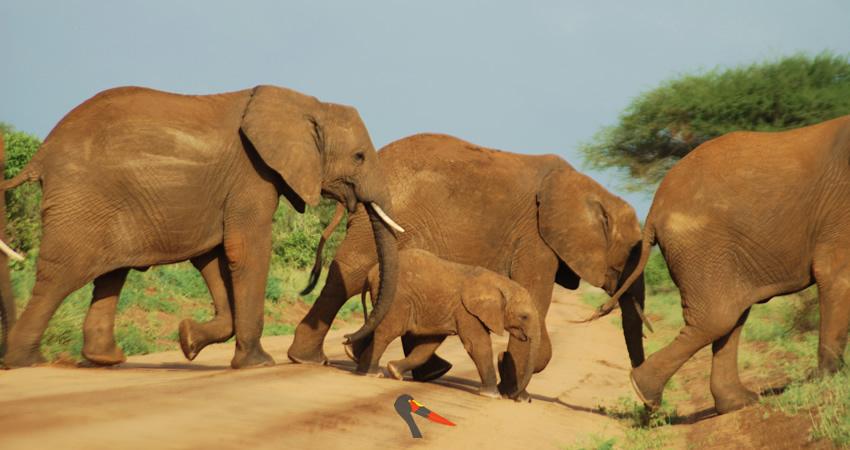 slide-heard-of-elephants-crossing-tsavo