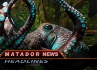 Image of octopus for Matador News Headlines