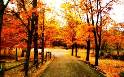Autumn Inspiration | Sunhealers