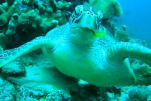 eating turtle