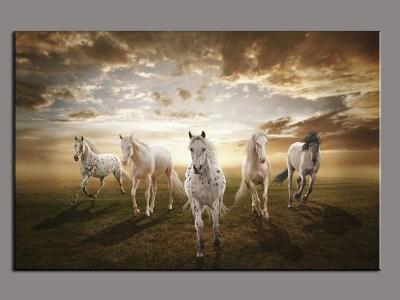 صور خلفيات خيول عربية اصيلة واجمل احصنة في العالم HD   سوبر كايرو