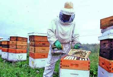desabejado con humo miel apicultura