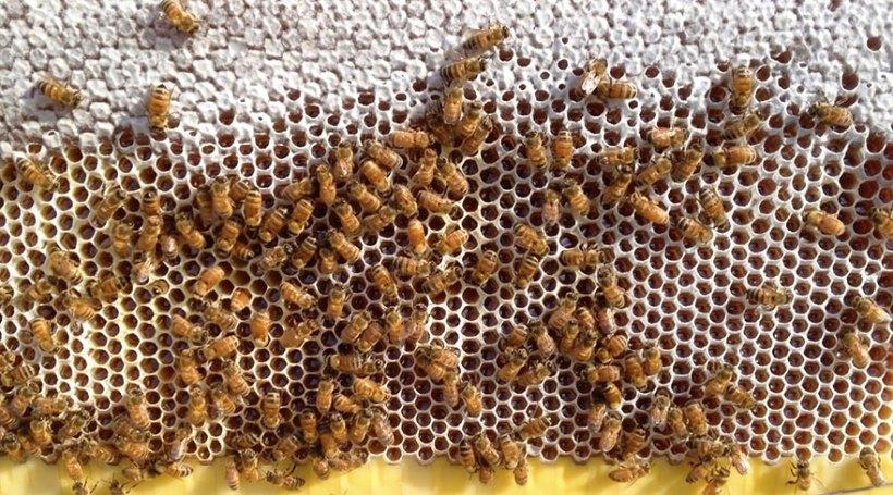 honey-on-tap-flow-hive-stuart-cedar-anderson-7