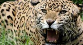 Proyecto- Fomentado la Convivencia con Felinos en Costa Rica2