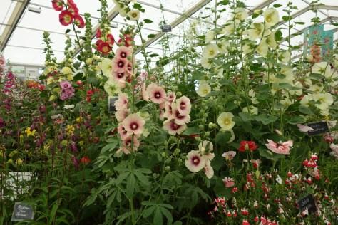 RHS Hampton court flower show 2015