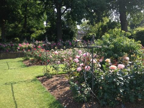 RHS rose garden