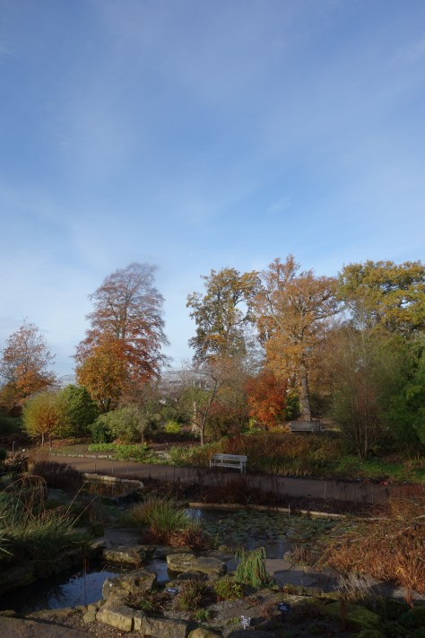 Autumn in Wisley