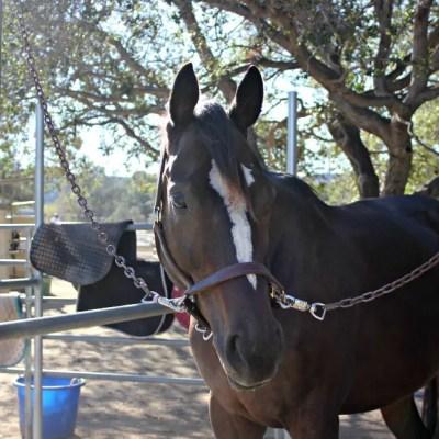 When Good Horses Go Ballistic--interpreting a violent outburst SaddleSeeksHorse.com