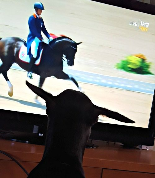 Missie was fascinated by the Olympic dressage.