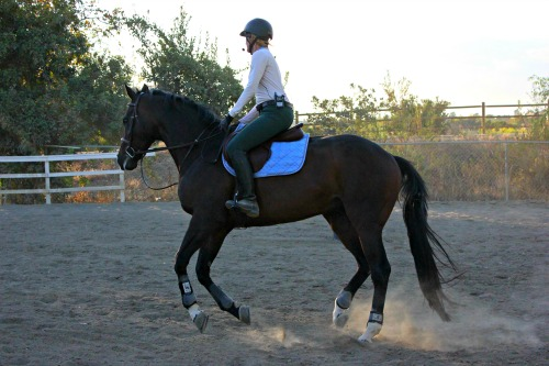 3 Reasons Riding Horses is Good for Your Brain