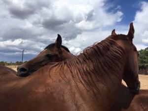 herd_grooming