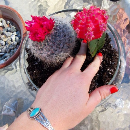 DIY succulent terrarium sustainable daisy thrifting environmental step by step