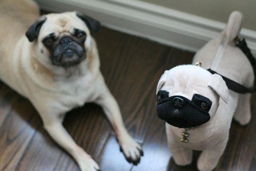 Pug bag and pug