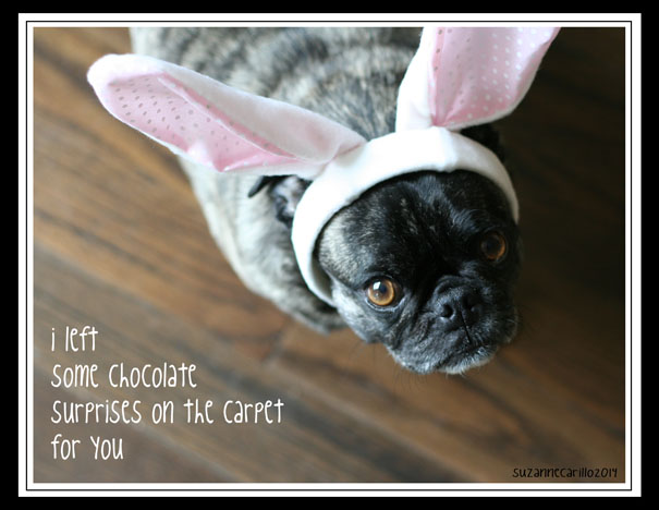 Chocolate surprise easter pug card suzannecarillo