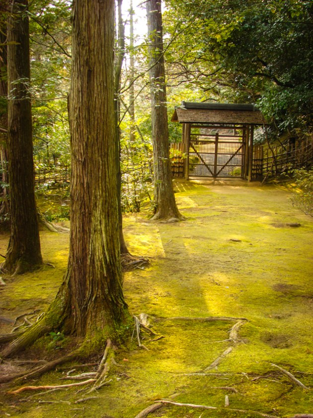 Mysterious Japanese path