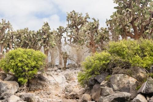 Landscape on Santa Fe Island Galapagos