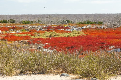 Colorful Landscape on Seymour Island, Ecuador