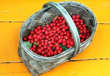 Боярка ягода полезные свойства