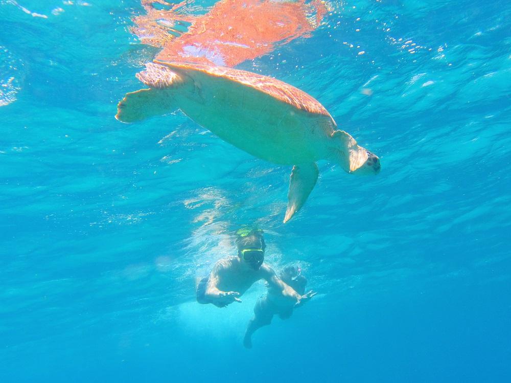 Chloe & Ben Swimming To Turtle