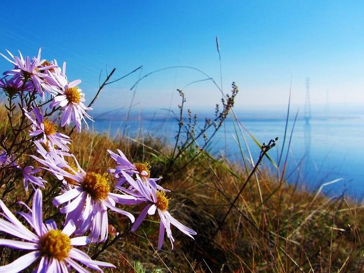 russia-potd-yakutsk-lena-river-flowers