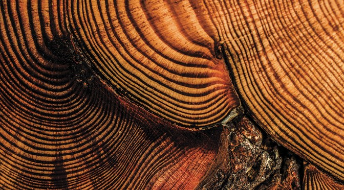 Tree rings from an old tree.
