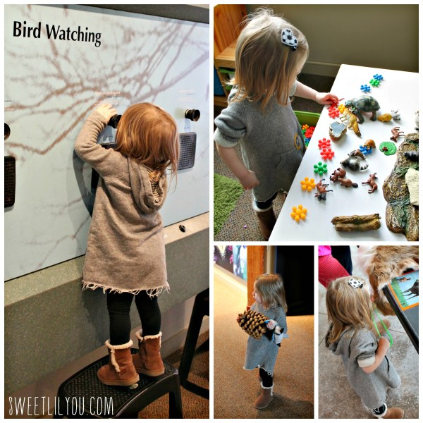 Puzzles and learning at the Environmental Education Center. Nature activities Bristol RI