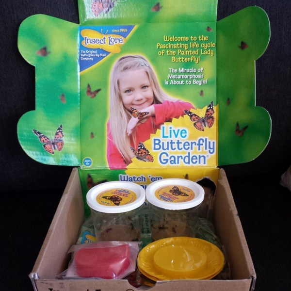 Insect Lore Live Butterfly Garden kit.