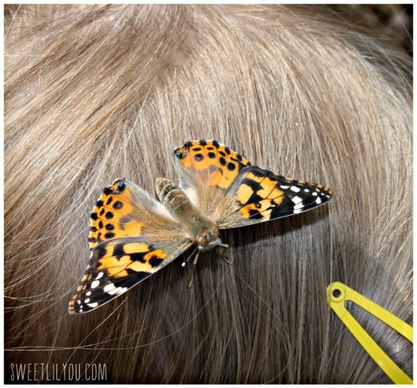 Butterfly in girls hair