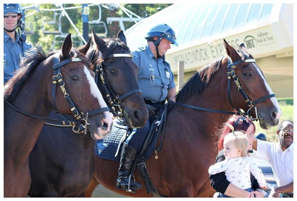 State Police Horses