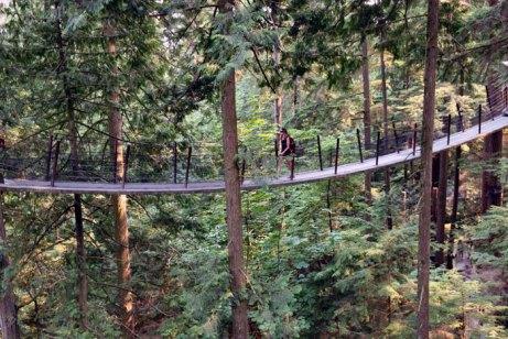 suspension-bridge-2-web