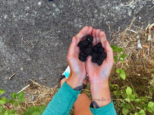 fresh wild blackberries.