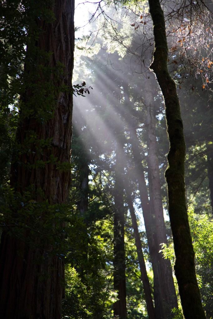 Muir Woods, CA | www.sweetteasweetie.com