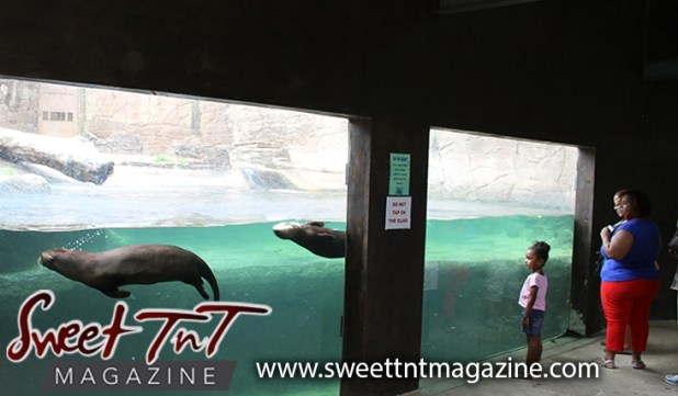 1. Main pic watching otters