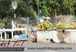 Coconut vendor in UWI opposite U-WEE doubles in University of West Indies, St Augustine, Sweet T&T, Sweet TnT, Trinidad and Tobago, Trini, vacation, travel