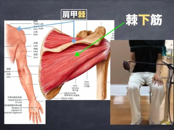 肩を痛めない為のインナーマッスルトレーニング その2