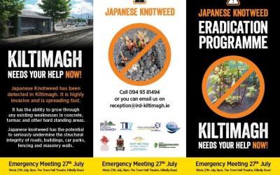 Japanese Knotweed Mayo Meetings