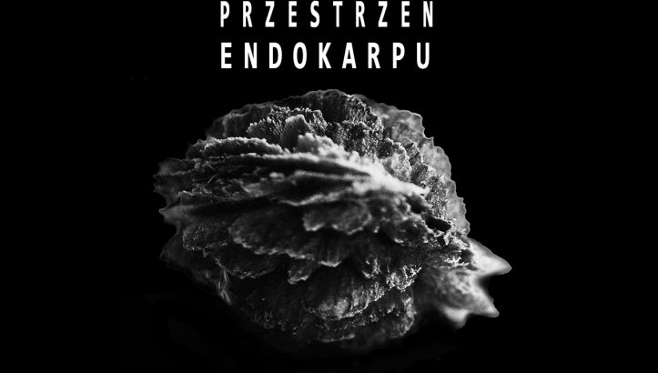 Wystawa Przestrzeń endokarpu / fot. grupa artystyczna M37A