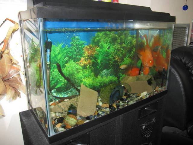 30 Gallon tank with filter Free For A Good Home   Sydney   Fish for