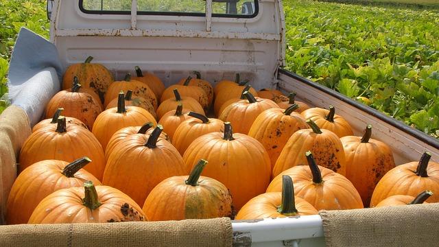 pumpkin-1212801_640