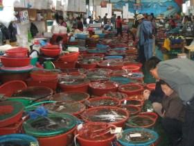 莞島の活魚海産物センター