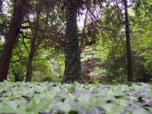 park dendrologiczny w Lipnie